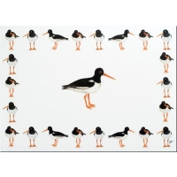 Placemat Oystercatchers